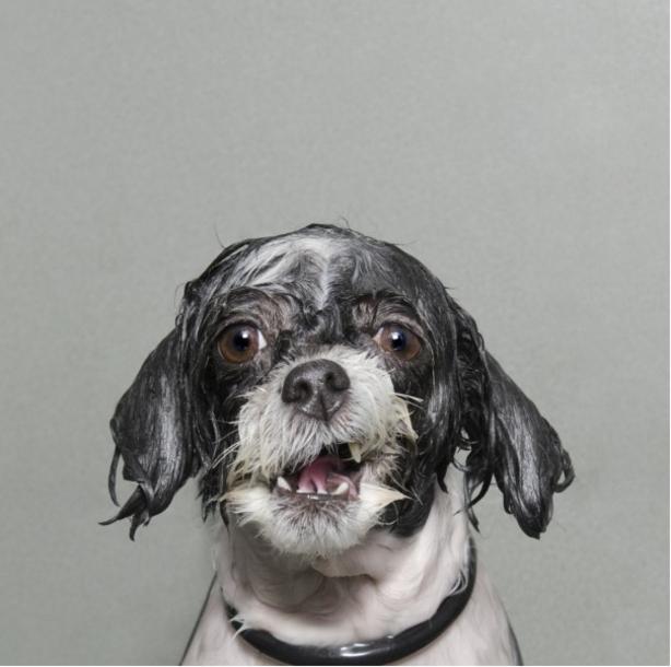 "BELLOMONDO ""wet dog"" Hundefoto"