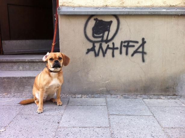 Ein Bulldoggen Mischling sitzt auf der Straße und wartet angeleint